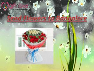 Send Flowers to Bangalore Online Via Giftalove.com