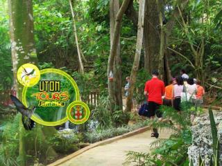 Uton Tours Zipline Adventure Beach Tour Cruise Tour