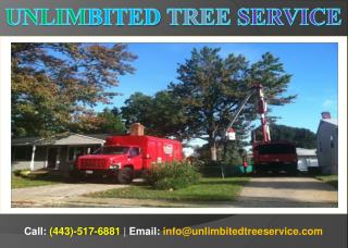 Affordable Tree Service Silver Spring