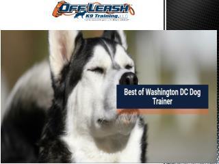 Washington DC dog trainers
