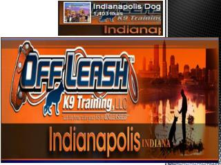 Indianapolis dog trainers Company in USA