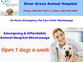 Emergency and Affordable Animal Hospital Mississauga