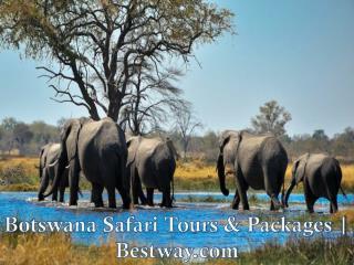 Botswana Safari Tours & Packages | Bestway.com