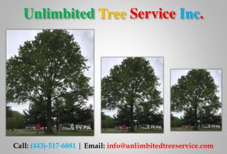 Tree Trimming Services in Columbia, MD