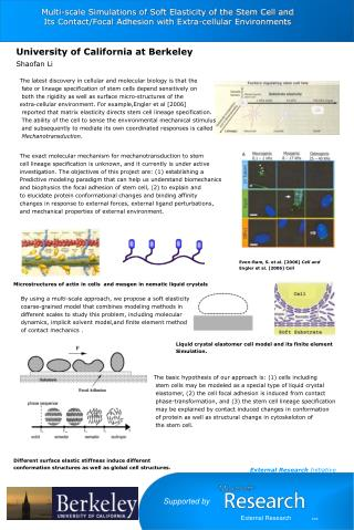 Multi-scale Simulations of Soft Elasticity of the Stem Cell and  Its Contact