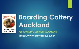 Barndale Boarding Cattery Auckland