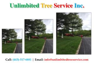 Tree Trimming Services in Bowie, MD