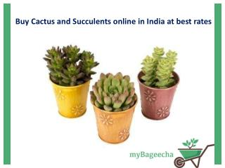 Buy Cactus and Succulents Online in India at Best Rates