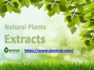 Natural Plants Extracts | Natural Ingredients