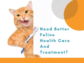 Cat Veterinary clinic in West Palm Beach