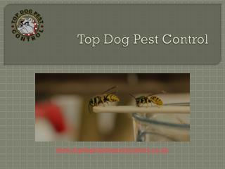 Top Dog Pest Control - Greenwich Wasp Control