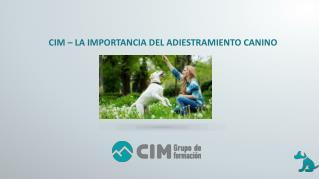CIM - La importancia del adiestramiento canino