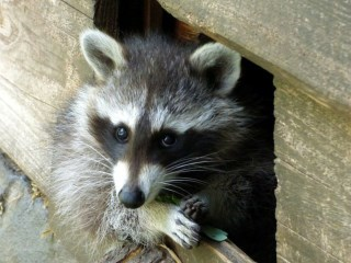 Illinois wildlife control service