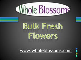 Bulk Fresh Flowers - www.wholeblossoms.com