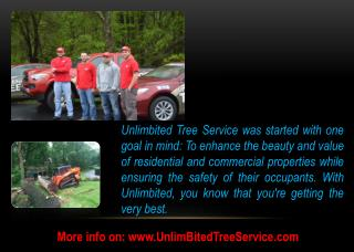 Tree Removal Services in Baltimore, Columbia