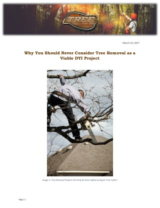 Why You Should Never Consider Tree Removal as a Viable DYI Project