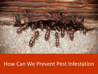 How Can we Prevent Pest Infestation?