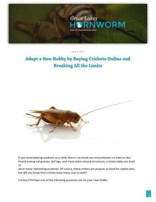 Adopt a New Hobby by Buying Crickets Online and Breaking All the Limits