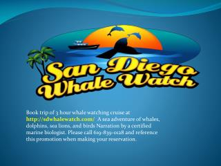 best whale watching in san diego