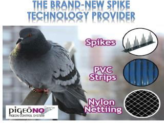 Pigeon Control Products: PigeoNO Spikes