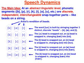 Speech Dynamics  The Main Idea: At an abstract linguistic level, phonetic segments e.g., [b], [p], [r], [k], [i], [A], [