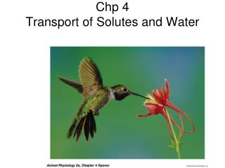 Chp 4 Transport of Solutes and Water
