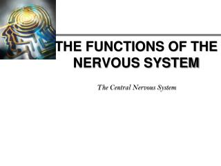 THE FUNCTIONS OF THE NERVOUS SYSTEM  The Central Nervous System