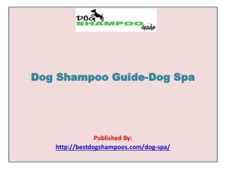 Dog Shampoo Guide