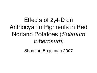 Effects of 2,4-D on Anthocyanin Pigments in Red Norland Potatoes Solanum tuberosum