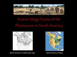 Extinct Mega Fauna of the   Pleistocene in North America