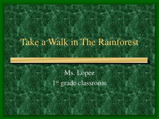 Take a Walk in The Rainforest