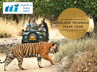 Golden Triangle and Tiger Tour | Golden Triangle Tour with Ranthambhore