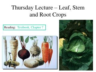 Thursday Lecture   Leaf, Stem and Root Crops