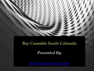 Buy Cannabis Seeds Colorado