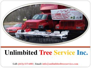 Tree Trimming Service in Baltimore, MD