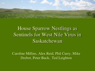 House Sparrow Nestlings as Sentinels for West Nile Virus in Saskatchewan