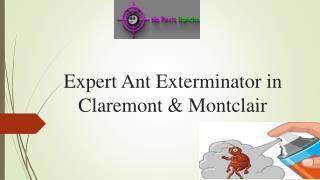 Expert Ant Exterminator in Claremont & Montclair