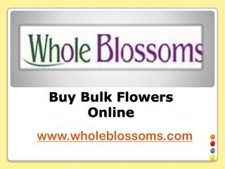 Buy Bulk Flowers Online - www.wholeblossoms.com