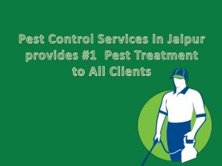 Pest Control Services in Jaipur provides #1  Pest Treatment to All Clients