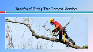 Benefits of Hiring Tree Removal Services