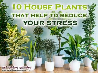 10 Best Houseplants that Clean the Air and Relieve Stress