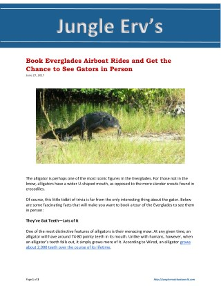 Book Everglades Airboat Rides and Get the Chance to See Gators in Person