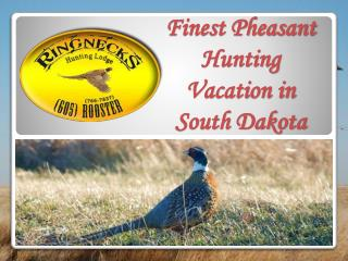Finest Pheasant Hunting Vacation in South Dakota