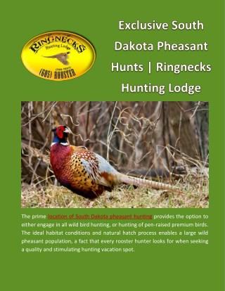 Exclusive South Dakota Pheasant Hunts | Ringnecks Hunting Lodge