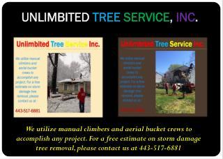 Storm Damage Tree Service Baltimore, MD