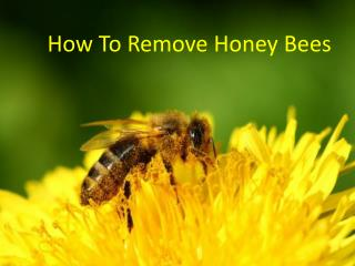 How to Remove Honey Bees