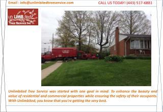 Tree Service Burtonsville, Maryland