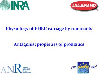 Physiology of EHEC carriage by ruminants  Antagonist properties of probiotics