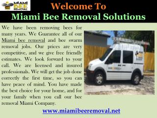 Bee Removal in Miami
