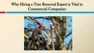 Why Hiring a Tree Removal Expert is Vital to Commercial Companies